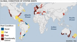 Global condition of oyster reefs (via The Nature Conservancy report)