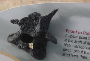 Replica of a bison vertebrae pierced by a prehistoric spear point, from Soapstone Prairie Natural Area.