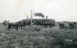 lamar hay crew 1912