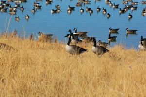 """Gaggle from Lowry, Denver, Colorado (photo by cooper gary""""/ https://www.flickr.com/people/gtcooper25/)   GT Cooper Photography"""